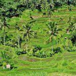 Bali rondreizen